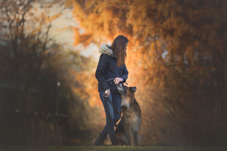 Lichtspiel Hundeportrait, Hundeshooting, Dogshooting