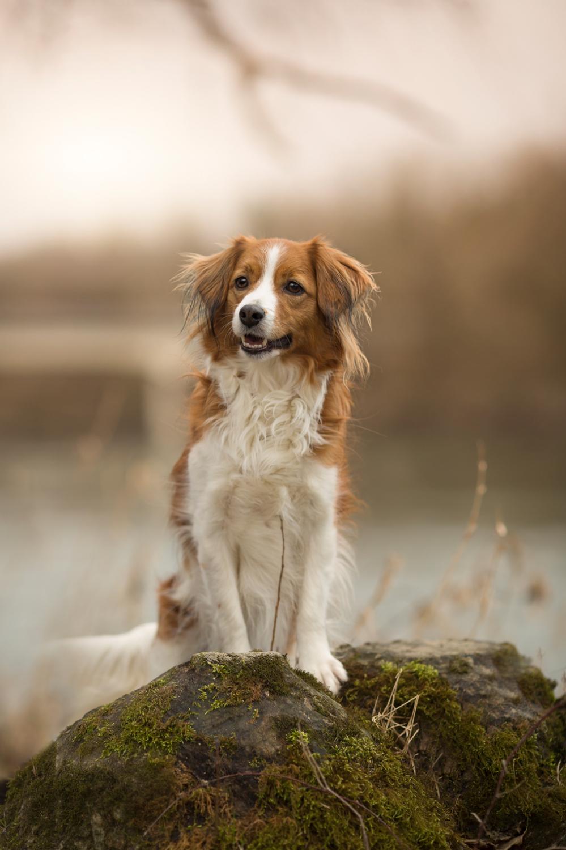 Hundeshooting Brugg, Hunde Outdoorshooting Aargau