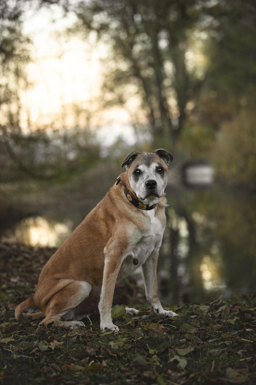 Hundeshooting Aargau